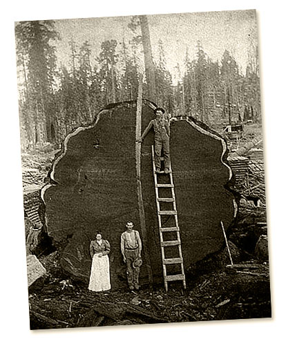 Vintage logging photo courtesy of Weyerhaeuser