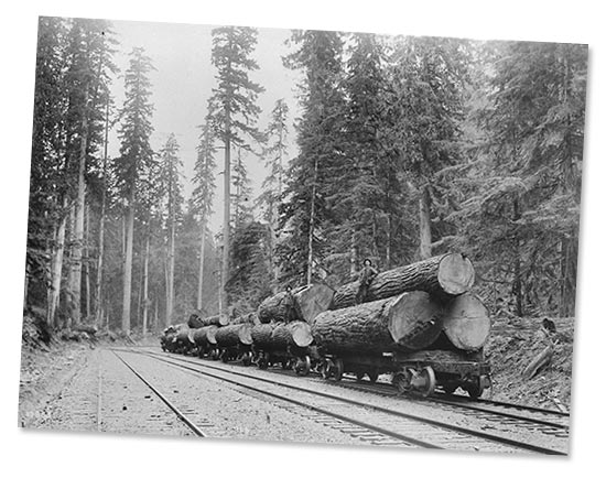 Logs loaded on rail cars as seen in this vintage logging photo