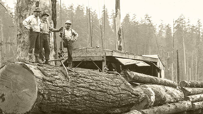 Vintage logging photo showing three loggers standing atop a fallen tree